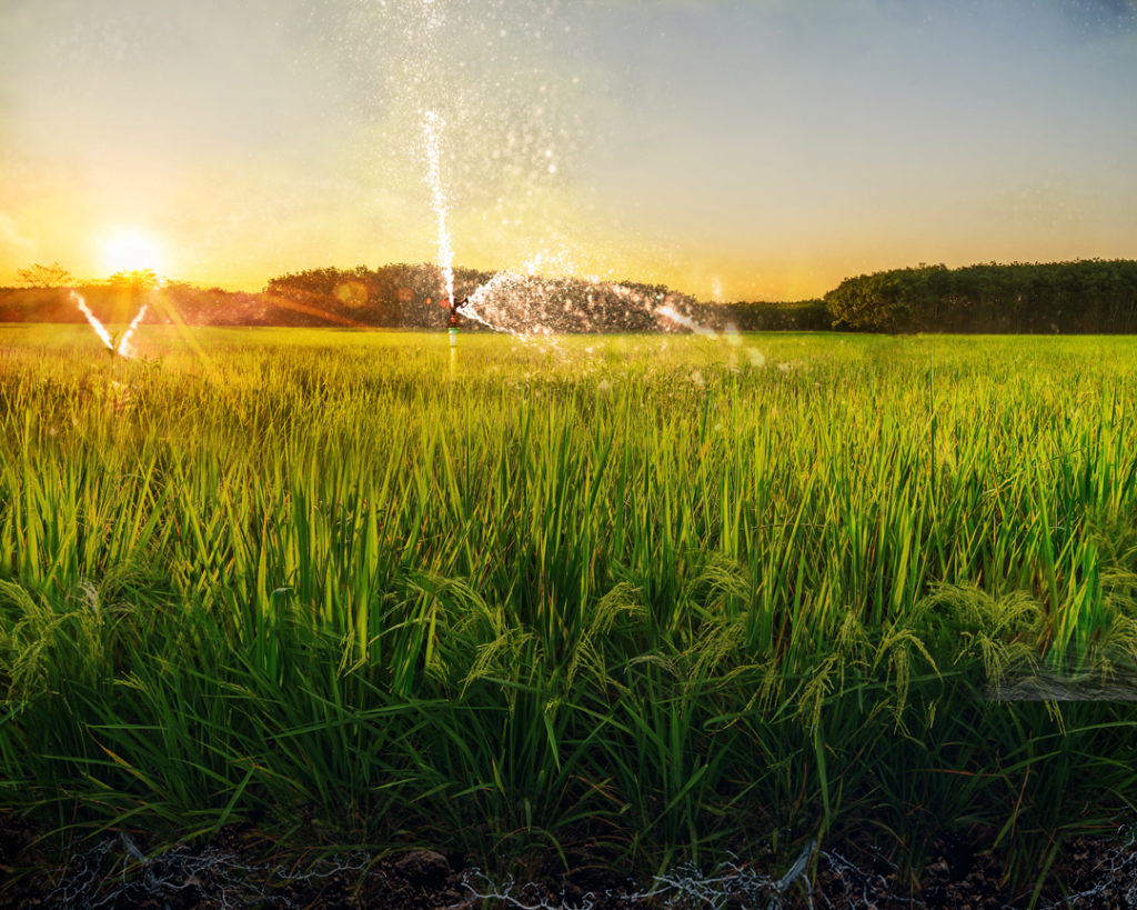 Organic Farming Gets a Super Bowl Spotlight: Why Regenerative Agriculture Is Beyond Sustainable